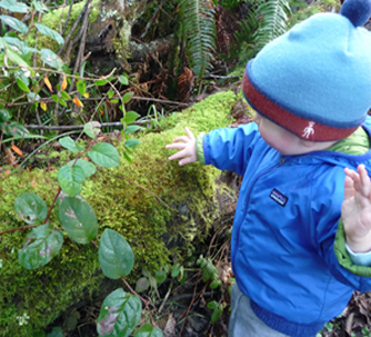 discovering moss